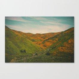 California Poppies 039 Canvas Print