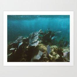 Mexican Caribbean Sealife Art Print