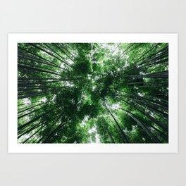 Bamboo Forest, Kyoto, Japan Kunstdrucke