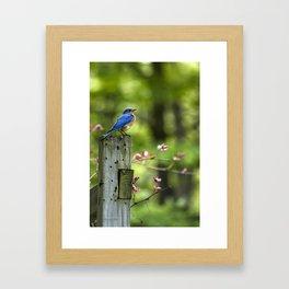 Bluebird Perch Framed Art Print