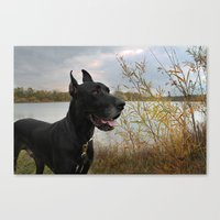 great dane Canvas Prints featuring Great Dane by Allegranicolephotography