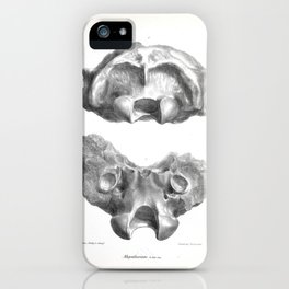 The Zoology of the Voyage of H.M.S. Beagle 1840 - Fossil Mammalia - Megatherium iPhone Case