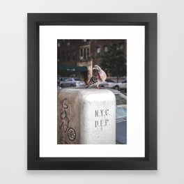 NYC Pigeon Framed Art Print