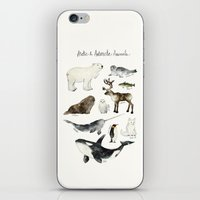 arctic monkeys iPhone & iPod Skins featuring Arctic & Antarctic Animals by Amy Hamilton