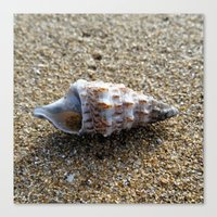 seashell Canvas Prints featuring Seashell by WonderfulDreamPicture
