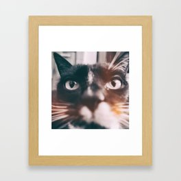 photo cat Jagoda #photo #cat Framed Art Print