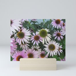 Echinacea Mini Art Print