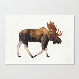 Watercolour Moose Drawing Canvas Print