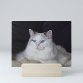 Ragdoll Cat Her Majesty Mini Art Print