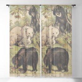 Ursidae Sheer Curtain