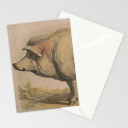 Vintage Illustration of a Domesticated Pig (1874) Stationery Cards