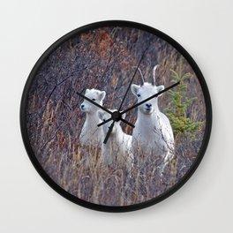 Dall Sheep Ewe With Lambs Wall Clock