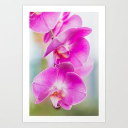 Blooming Together - Orchid Photography Art Print
