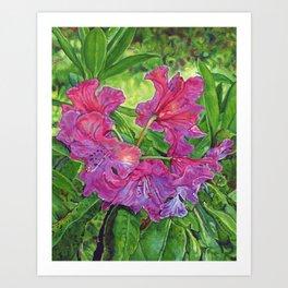 Pink Rhodo Art Print
