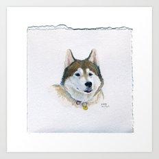 Drawing #81 - A Siberian Husky Art Print