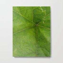 Wild Celery Metal Print