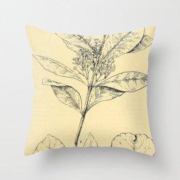 Bothalia 1921 Throw Pillow