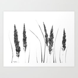 Calamagrostis Stricta Art Print