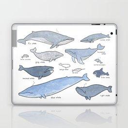 Whales Dolphins & Porpoises Laptop & iPad Skin