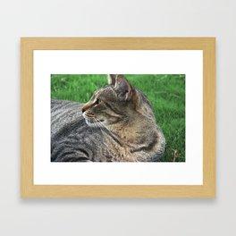 Serene Cat Framed Art Print