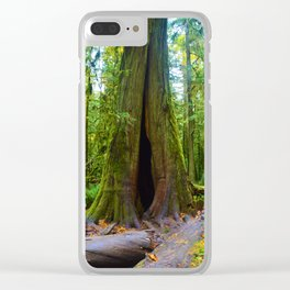 Cathedral Grove on Vancouver Island, BC Clear iPhone Case