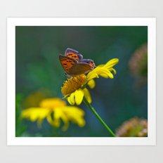 Butterfly on yellow flower - lycaena phloeas 3497 Art Print