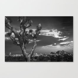 Joshua Tree at Sunset in Joshua Tree National Park in Black and White Canvas Print
