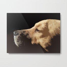 Van Dog Metal Print