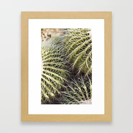 Where the Barrel Cactus Meet Framed Art Print
