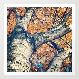 The Fall Birch Art Print
