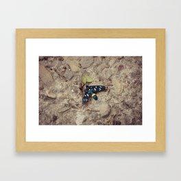 Amata phegea moth Framed Art Print