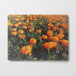 Fields of Orange Metal Print