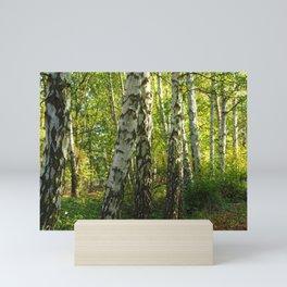Silver Birch in Sunlight Mini Art Print