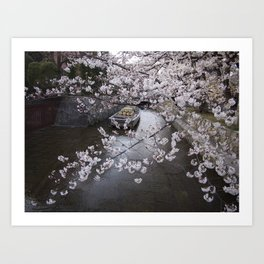 cherry blossoms in Japan Art Print