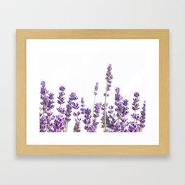 Purple Lavender #4 #decor #art #society6 Framed Art Print
