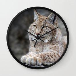 Young lynx portrait Wall Clock