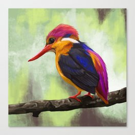 Bird Portrait: Oriental Dwarf Kingfisher Canvas Print