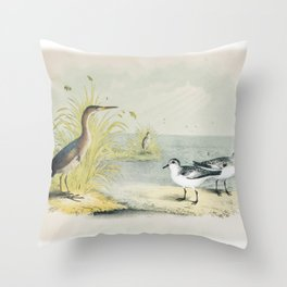 PLATE XL The Least Bittern The Sanderling, or Ruddy Plover Ornithology Birds Vintage Studies America Throw Pillow