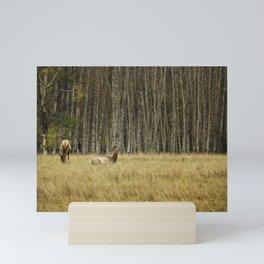 Cow Elk Resting - Grand Tetons Mini Art Print