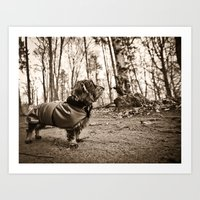 DACKEL DOG #33 Art Print