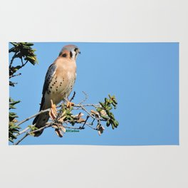American Kestrel on Watch in La Verne Rug