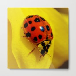 Ladybug on Yellow Flower Metal Print