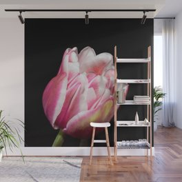 Two Toned Tulip Bloom On Black Wall Mural