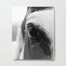 Eye of the Horse | Nature and Landscape Photography Metal Print