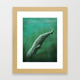 Sperm Whale Framed Art Print
