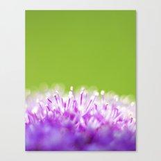 Pompoms Canvas Print