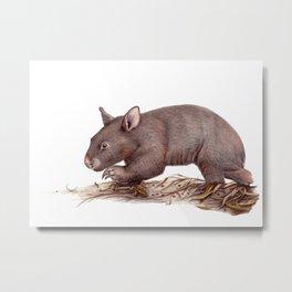 Wombat Walk Metal Print