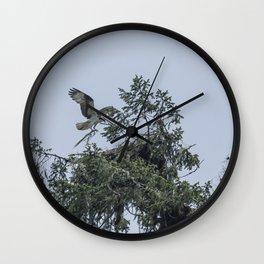 Osprey Reinforcing Its Nest 2017 Wall Clock