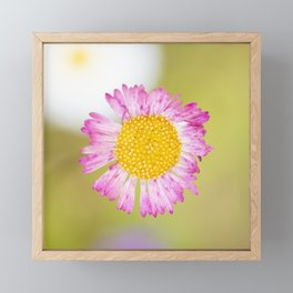 Yellow and pink wildflower Framed Mini Art Print