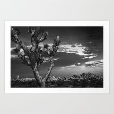 Joshua Tree at Sunset in Joshua Tree National Park in Black and White Art Print